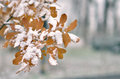 Leaf covered with snow Royalty Free Stock Photo