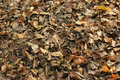 Leaf debris on the forest floor Royalty Free Stock Photography