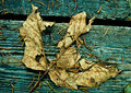 Leaf decay wasting away on the boardwalk untouched and at peace Royalty Free Stock Photo