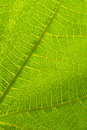 Leaf detail green close up macro photograph Stock Photography