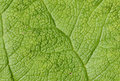 Leaf detail green ideal to use as background Royalty Free Stock Photos