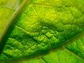 Leaf details Stock Image