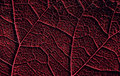 Leaf details like cell by cell Royalty Free Stock Photo