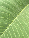 Leaf details and line of green Stock Photos