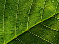 Leaf with drop 2 Royalty Free Stock Photo