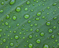 Leaf droplet Stock Image