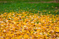 Leaf fall  background Stock Image