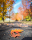 A leaf falls capture of colorful landing on driveway in oregon during fall Royalty Free Stock Photo