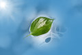 Leaf floating in blue water with sun reflection / refraction on