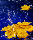 Leaf floating on water with rain.
