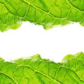 Leaf frame Royalty Free Stock Photo