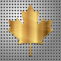 Leaf of gold canadian maple on steel background vector illustration Royalty Free Stock Photos