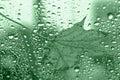 Leaf on Green Glass