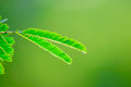 Leaf Green Nature Background