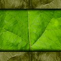 Leaf green tree macro texture background wallpaper Royalty Free Stock Photo