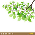 Leaf green tree vector illustration Royalty Free Stock Images