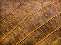 Leaf grunge texture Royalty Free Stock Images