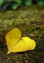 Leaf - heart Royalty Free Stock Images
