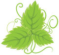 Leaf illustration eps Royalty Free Stock Images