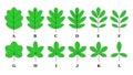 Leaf lamina Royalty Free Stock Photo