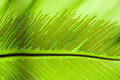 Leaf the large green Royalty Free Stock Photography