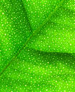 Leaf lime macro Στοκ φωτογραφία με δικαίωμα ελεύθερης χρήσης