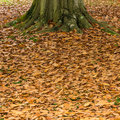 Leaf Litter Stock Images