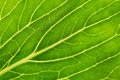 Leaf macro texture background picture Stock Photo