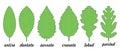 Leaf margin shapes for trees Stock Image