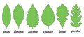 Leaf margin shapes Royalty Free Stock Photo
