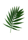 Leaf one green white background Royalty Free Stock Images