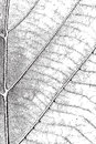 Leaf overlay texture distress for your design eps Royalty Free Stock Image
