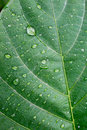 Leaf of a plant with drops