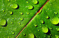Leaf with rain droplets photo of a Stock Image
