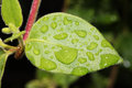 Leaf with rain drops closeup shot shallow dof Royalty Free Stock Images