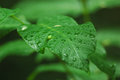Leaf after a rain in summer day Royalty Free Stock Photography