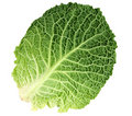 Leaf of Ripe Savoy Cabbage Stock Image