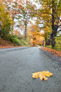 Leaf on road in autumn single lies a dirt winding its way through woods with brightly colored trees peak foliage Royalty Free Stock Image