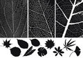 Leaf silhouette Stock Image
