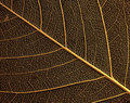 Leaf skeleton Royalty Free Stock Photography