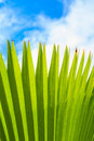 Leaf sky nature green blue healthy herb background Stock Photo