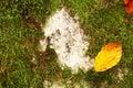 Leaf on stone Royalty Free Stock Photo