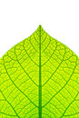 Leaf structure Royalty Free Stock Photo
