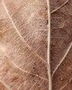 Leaf Strukture