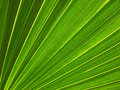 Leaf Surface Vein Pattern Royalty Free Stock Photo