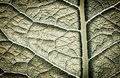 Leaf texture Royalty Free Stock Photos