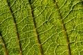 Leaf texture Stock Photos