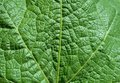Leaf texture background Stock Photography