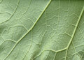 Leaf texture bstract asymmetry botanical botany Stock Photography