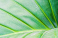 Leaf texture and chlorophyll dot photo of Stock Images